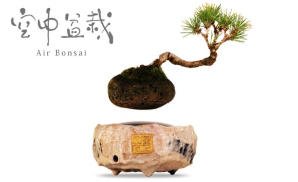 Air Bonsai Floating Plants
