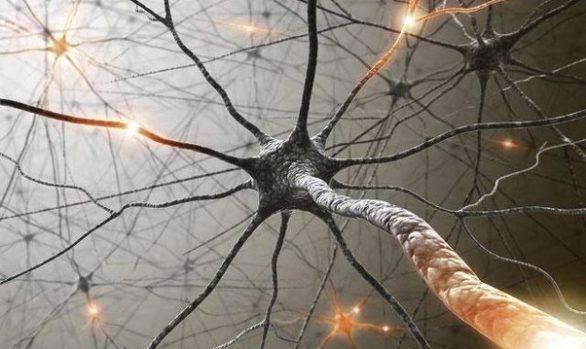 XtendLife Brain and Neurological Supplements